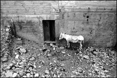 A donkey waits by a door in the small Palestinianvillage of Nahalin in the West Bank.