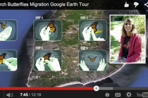 Google Earth Tour: Monarch Butterflies