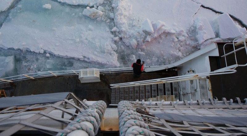 The Arctic. By Amanda Kowalski
