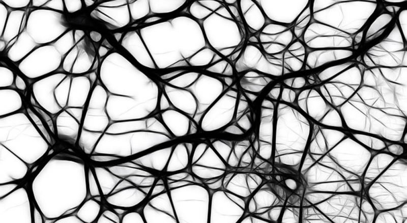 photo of neurons
