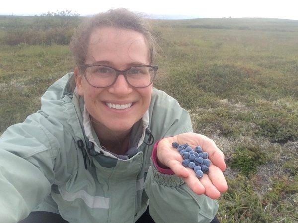 photo of picking blueberries in Alaska