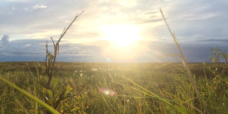 photo of the tundra in the summer